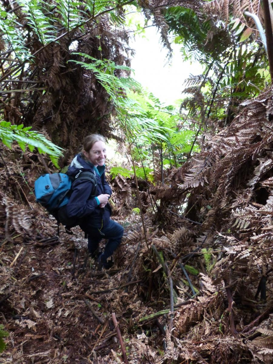 On her way to survey 'Spikies', Amy in the forests of St Helena