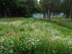 Glen Mosaic Garden © Chris Ferry