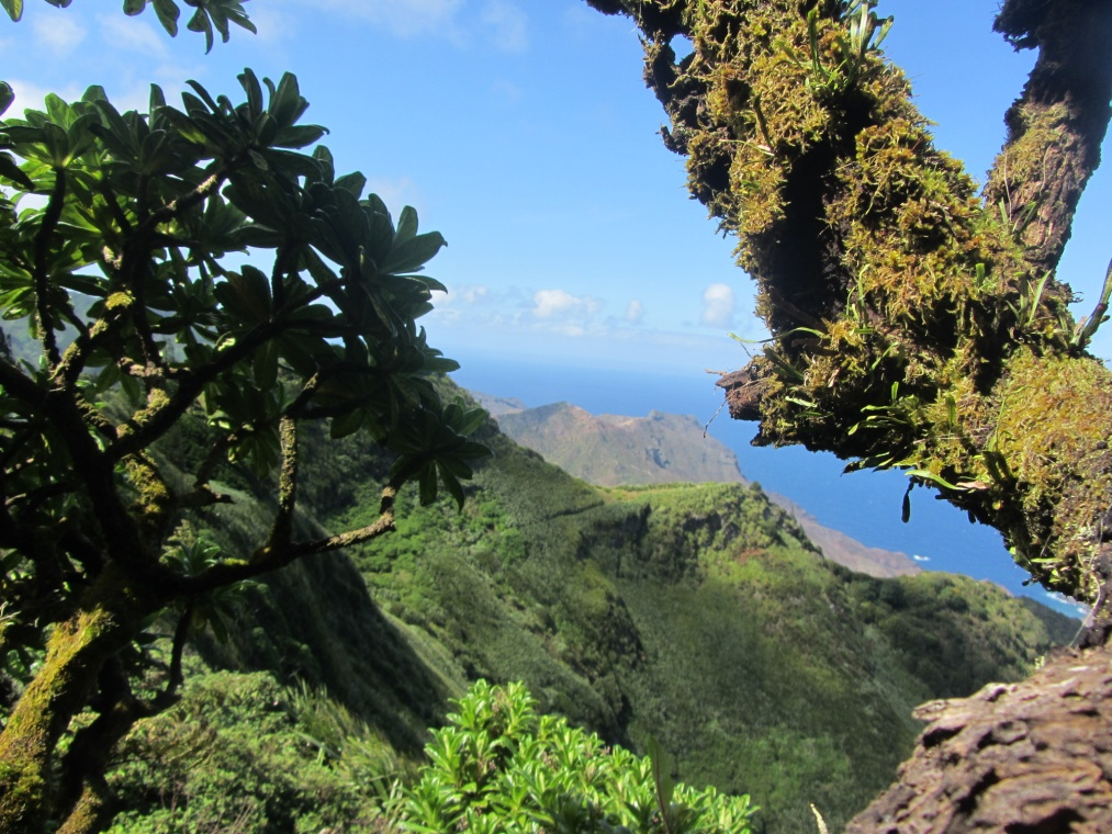 The cloud forests of St Helena are an invertebrate hotspot supporting many unique species