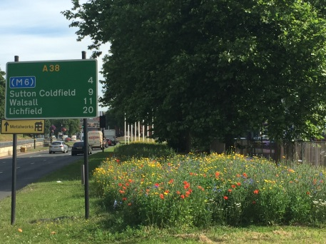 Urban Buzz hotspot rife with flowers on the entrance to city centre