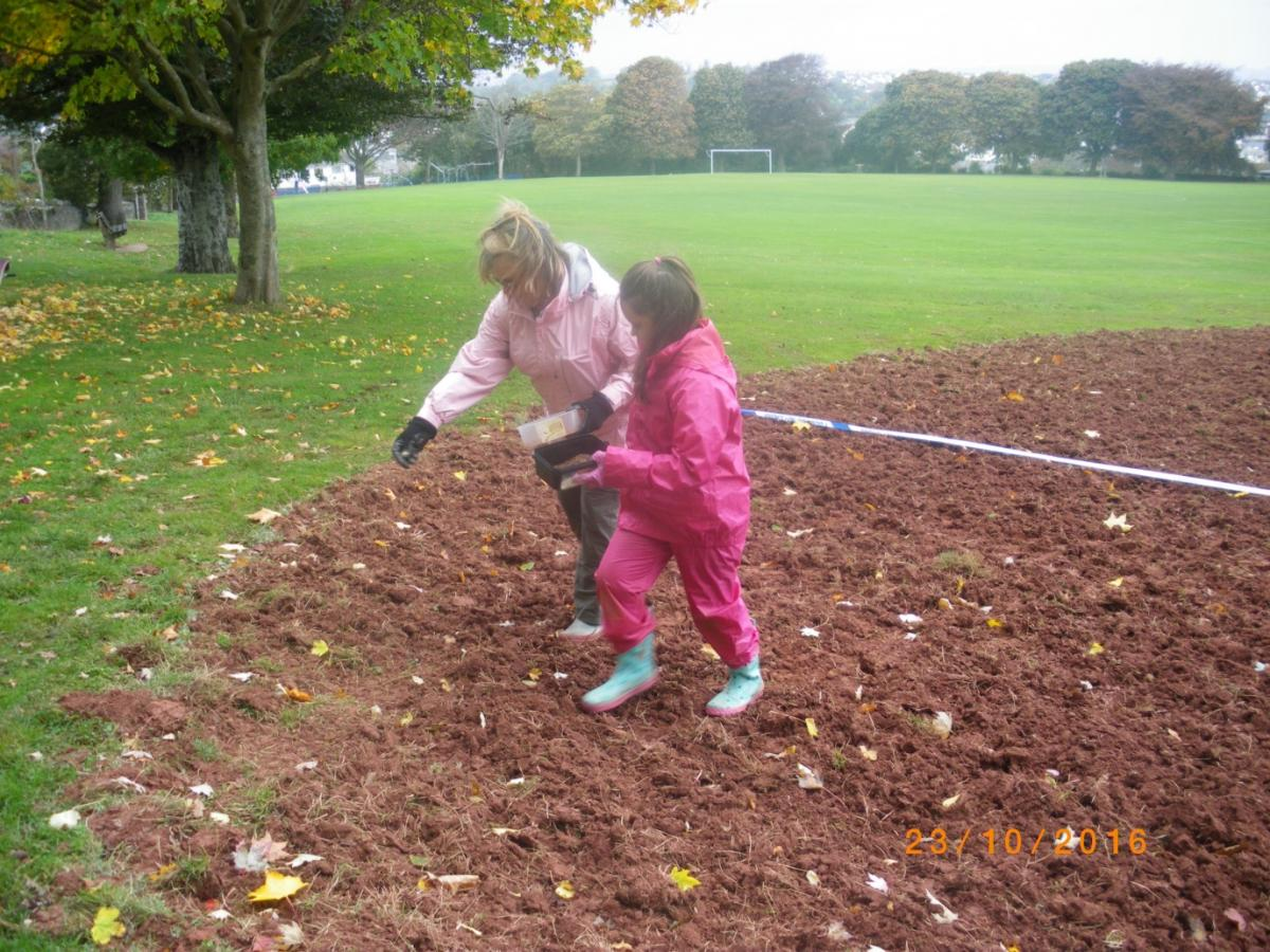 Volunteers sowing wildflower seeds at St Marys Park, Brixham